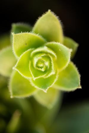 Succulent Blossom II by Erin Berzel