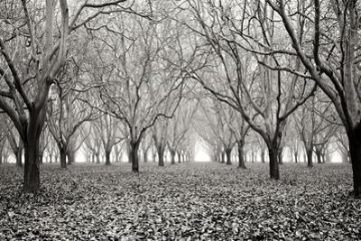 Tree Grove Pano BW I by Erin Berzel