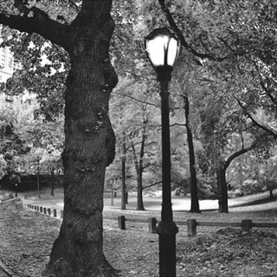 A Light in Central Park by Erin Clark