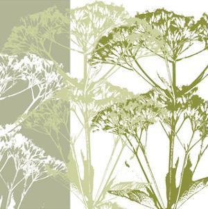 Delicate Greens by Erin Clark