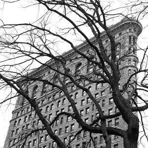 Flatiron with Tree (detail) by Erin Clark