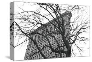 Flatiron with Tree by Erin Clark
