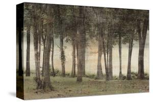 Forest by Erin Clark