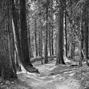 Mountain Hike by Erin Clark