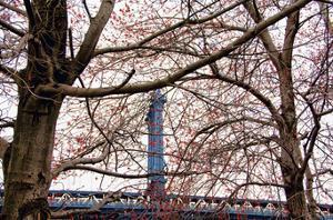 Red Blooms in Brooklyn by Erin Clark