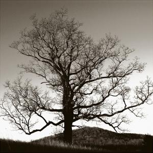 Solemn Tree by Erin Clark
