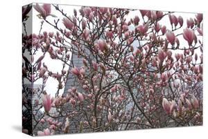 Springtime in New York by Erin Clark