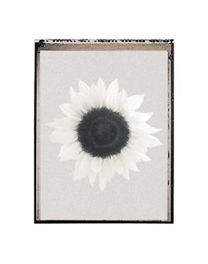 Sunflower Burst by Erin Clark