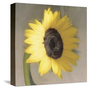 Sunflower by Erin Clark