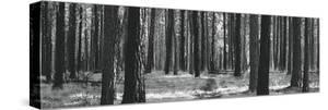 Tree Curtain by Erin Clark