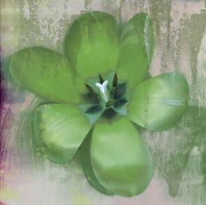 Tulip Fresco (green) by Erin Clark