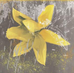 Tulip Fresco (yellow) by Erin Clark