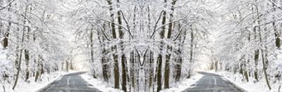 Two Roads Diverged in a Snowy Wood by Erin Clark