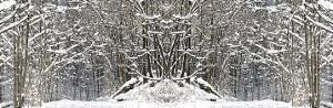 Winter Wonderland by Erin Clark