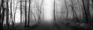 Woodland Walk by Erin Clark