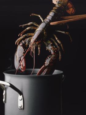 Lobster by Ernie Friedlander