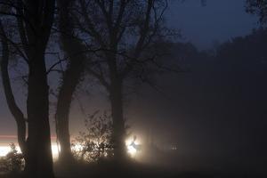 Fallow Deer (Dama Dama) Crossing Rural Road Through Berkhamsted Common at Dusk by Ernie Janes