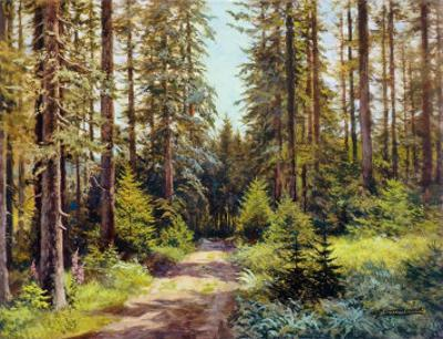Sunny Forest Road