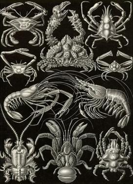 Crustaceans by Ernst Haeckel