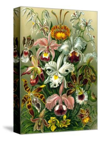 Different Varieties of Orchid, 1899 by Ernst Haeckel