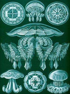 Examples of Discomedusae from 'Kunstformen Der Natur', 1899 by Ernst Haeckel