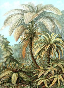 Ferns by Ernst Haeckel