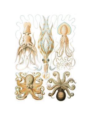 Gamochonia by Ernst Haeckel