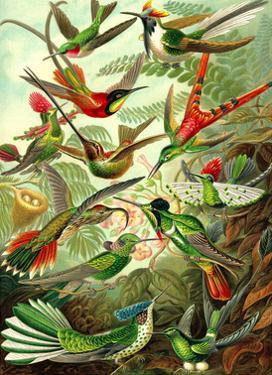 Hummingbirds by Ernst Haeckel
