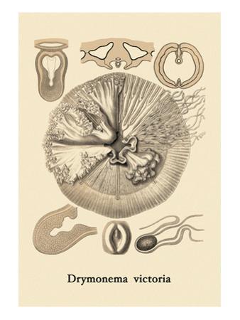 Jellyfish: Drymonema Victoria by Ernst Haeckel