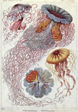 Jellyfish, from Kunstformen Der Natur, 1874 by Ernst Haeckel