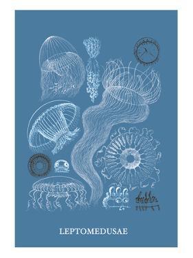 Jellyfish: Leptomedusae by Ernst Haeckel
