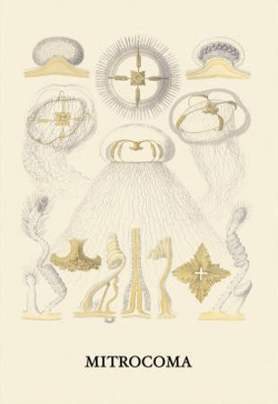 Jellyfish: Mitrocoma by Ernst Haeckel
