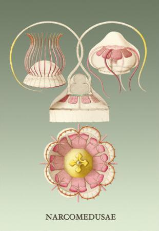 Jellyfish: Narcomedusae by Ernst Haeckel