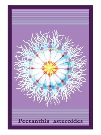 Jellyfish: Pectanthis Asteroides by Ernst Haeckel