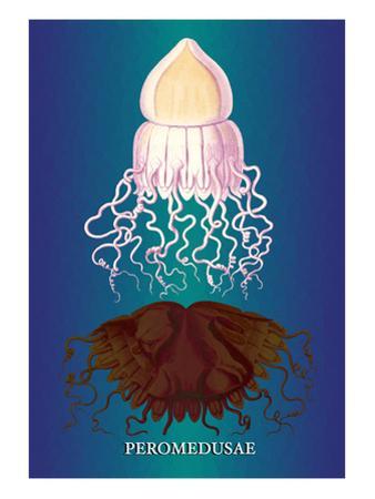 Jellyfish: Peromedusae by Ernst Haeckel