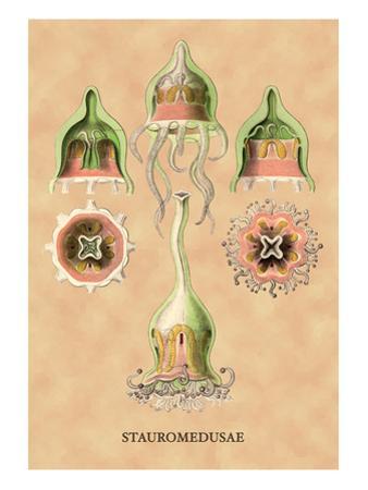 Jellyfish: Stauromedusae by Ernst Haeckel