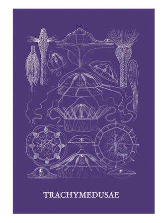 Jellyfish: Trachymedusae by Ernst Haeckel