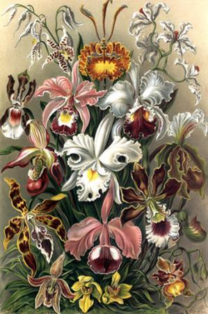 Orchids by Ernst Haeckel