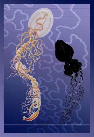 Pair of Jellyfish by Ernst Haeckel