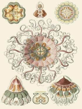 Sophisticated Sealife II by Ernst Haeckel