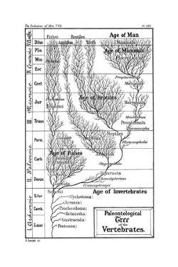 Paleontological Tree of Vertebrates, 1910 by Ernst Heinrich Philipp August Haeckel