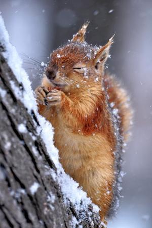 Winter by Ervin Kobakci