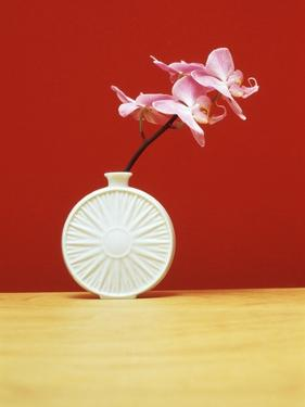 Single orchid in a vase. by Estelle Klawitter