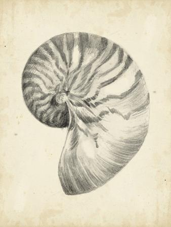 Antique Shell Study I by Ethan Harper