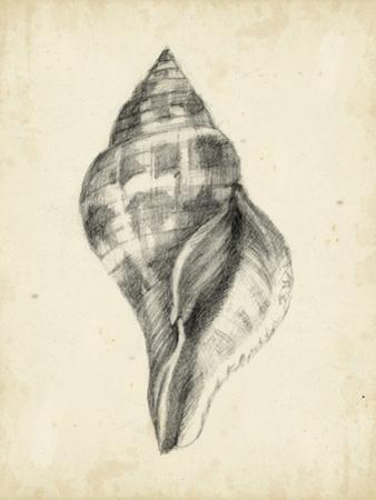 Antique Shell Study II by Ethan Harper