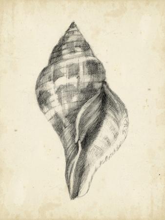 Antique Shell Study II