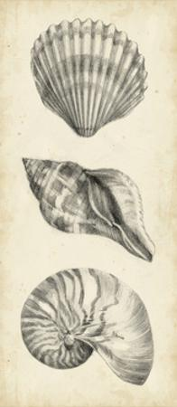 Antique Shell Study Panel I by Ethan Harper