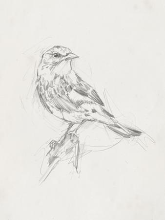 Avian Study  I by Ethan Harper