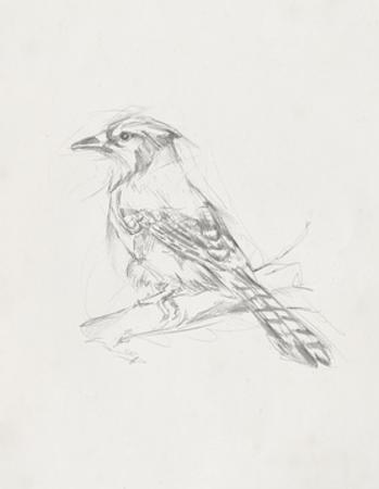Avian Study  IV by Ethan Harper