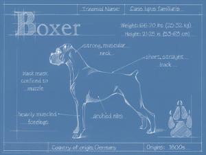 Blueprint Boxer by Ethan Harper